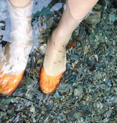 足を水につけているとたくさん寄ってきます!