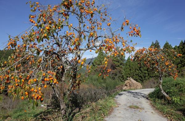 柿のマリネ1