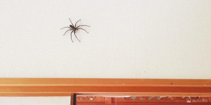 を 食べる クモ ゴキブリ ゴキブリ を