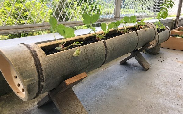 プランター で 育てる 野菜